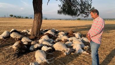Izmir'de Yildirim Düstü, 55 Küçükbas Hayvan Telef Oldu
