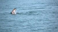 YUNUSLAR - Karadeniz'de Yunus Söleni