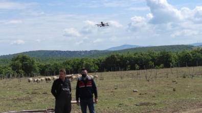 Kaybolan Koyunlar Drone Ile Bulundu