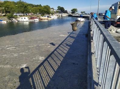 Küçükçekmece'de Bir Yandan Müsilaj Temizligi Bir Yandan Deniz Keyfi