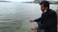 OLTA - Marmara Denizi'ndeki Müsilaj Karadenizli Balikçilari Endiselendiriyor