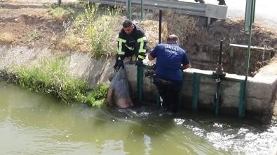 Sulama Kanalinda Erkek Cesedi Bulundu