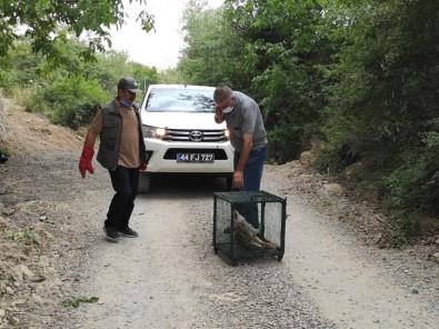 Telef Olan Tilkiyi Gören Doga Fotografçisi Duyarsiz Kalmadi