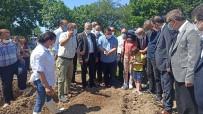 BAZLAMA - Türkiye'de Tek Özel Izinle Ekilen Il Olan Samsun'da Üreticilere Salep Yumrusu Dagitildi