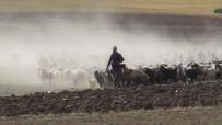 KEÇİ - 30 Koyunla Basladi, Devlet Destegiyle Çiftlik Kurdu