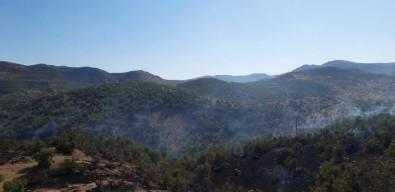 Dargeçit'te Ormanlik Alanda Yangin
