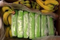 KOKAIN - Polonya'da Muz Kolilerinden 160 Kilogram Kokain Çikti