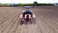 ÇIÇEKLI - Tarsus Belediyesi, Bu Kez De Yerli Tohumla Soya Fasulyesi Ekti