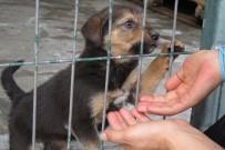 ÇANKAYA BELEDIYESI - Çankaya Belediyesi Sokak Hayvanlarini Unutmuyor