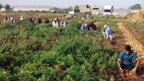 TEL AVIV - Israil, Gazze'ye Önemli Ve Zorunlu Ürünlerin Girisine Engel Olmayi Sürdürüyor