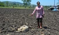 Köpekler Evin Bahçesindeki Tavsan, Tavuk Ve Koyunlari Telef Etti