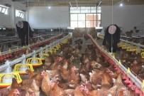 MESLEK LİSESİ - Lise Bahçesine Kurulan Profesyonel Tavuk Kümesi Üretime Katki Sagliyor