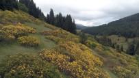 Orman Gülleri Yaylalarin Güzelligini Arttirdi