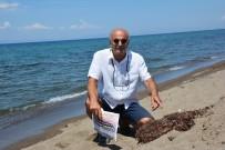YUMURTA - Marmara'da Deniz Salyasi, Izmir'de Sargassum Tehdidi