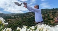 YUMURTA - Aydin'da Dogaya Ilk Kekligi Baskan Kaplan Saldi