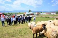 HÜSEYIN ÖNER - 'Köyümde Yasamak Için Bir Sürü Nedenim Var' Projesi Kapsaminda Üreticilere Koyun Dagitildi
