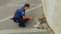 ÜST GEÇİT - (ÖZEL) Kadin Polis, Bir Aracin Çarpip Kaçtigi Yavru Kedinin Basindan Dakikalarca Ayrilamadi