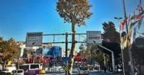 BEŞİKTAŞ - İBB Beşiktaş'taki 150 yıllık anıt çınarı yok etti