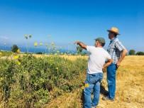 FARUK GÜNAY - Kusadasi'ndaki Endemik Bitki Türleri Incelendi
