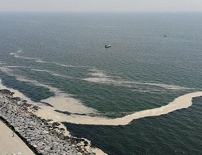 İstanbul'da müsilaj etkisini sürdürüyor! Avcılar Sahili'ni de kapladı.