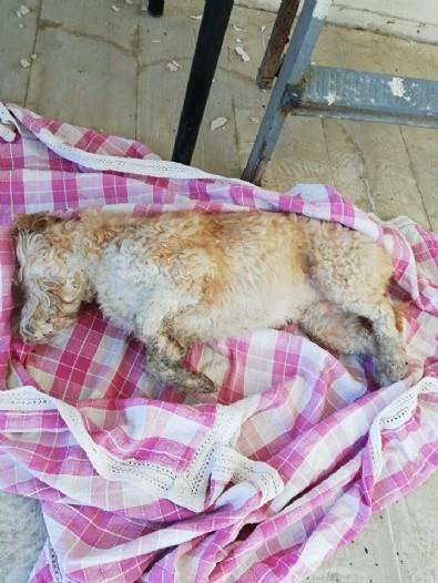Çanakkale'de vahşete uyandılar: 30 sokak hayvanı gece herkes uyurken zehirle öldürüldü