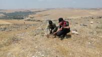 MAVIKENT - Özel Düzenekle Saka Kusu Avlayan Kaçak Avcilar Jandarmaya Yakalandi