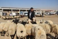 ABDULLAH DEMIR - Sanliurfa'da Kurbanliklar Görücüye Çikti