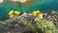 KRATER GÖLÜ - Dünyanin Ikinci Büyük Kraterinde Renk Cümbüsü