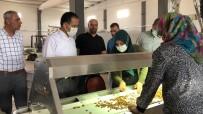 KALİFİYE ELEMAN - Dagtekin, OSB'de Incelemelerde Bulundu