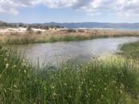 SALDA - Burdur Çevre Ve Sehircilik Il Müdürü Alacatli Açiklamasi 'Salda Gölü'nde Herhangi Bir Kirlilik Söz Konusu Degildir'