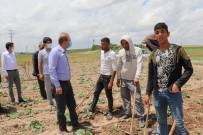 AHMET DEMİR - Aksaray'da Mevsimlik Tarim Isçilerinin Her Türlü Ihtiyaçlari Gideriliyor