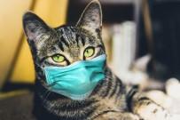 AVUSTRALYA - Avustralya'da Kedilerin Sokaga Çikmasi Yasaklaniyor