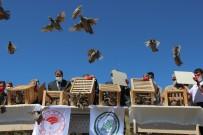 MÜSAMAHA - Yozgat'ta Üretilen 16 Bin 800 Keklik Dogaya Saliniyor