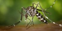 ASYA KAPLAN SİVRİSİNEĞİ ISIRIĞINA NE İYİ GELİR - Asya Kaplan sivrisineği nedir? Asya Kaplan sivrisineği nasıl ayırt edilir? Asya Kaplan sivrisineği ısırığına ne iyi gelir?