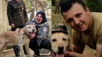 ZEYTİN DALI HAREKAT BÖLGESİNDE ŞEHİT - Şehit onbaşının gazi köpeği 'Atmaca' ailesine sahiplendirildi: Sanki yavrumdan bir parça geldi