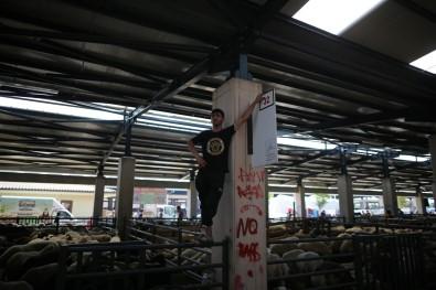 Bursa'da Hayvan Pazarlarinda Beklenen Hareketlilik Yasanmadi