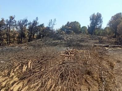 Foça'da Yanan 73 Hektarlik Ormanlik Alan Yeniden Yesilendirilecek