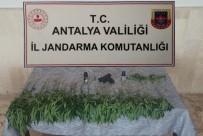 MERMİ - Bahçesinde Kenevir Eken Sahis, Düzenlenen Operasyonla Gözaltina Alindi