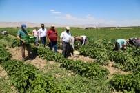 MARKET - Esenlik Genel Müdürü Ünlü'den Çiftçilere Destek Açiklamasi