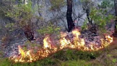 GÜNCELLEME - Osmaniye'deki Orman Yangini Kontrol Altina Alindi
