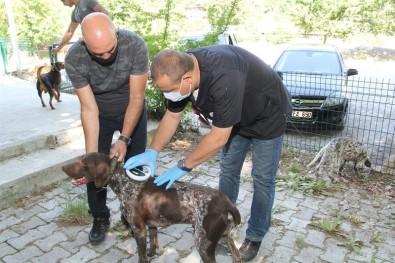 Isparta'da 36 Sahipli Köpek Kimliklendirildi