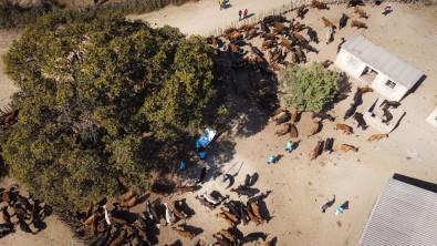 Türkiye Diyanet Vakfi, Zimbabve'de 116 Bin 200 Kisiye Kurban Eti Ulastirdi
