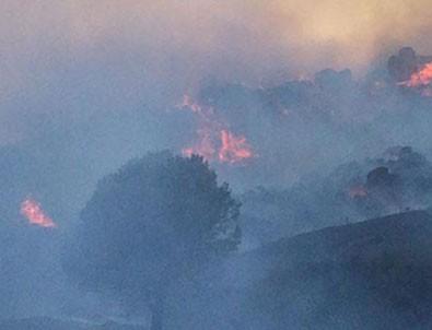 Avşa Adası'nda yangın!