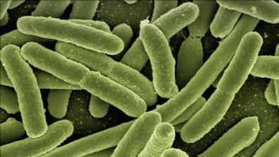 Binlerce yıllık buzulda 28 yeni virüs keşfedildi!