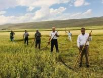 Kuraklik Çiftçiyi Eski Aletlere Yönlendirdi