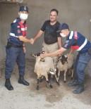 Turgutlu'da Kaybolan Küçükbas Hayvanlari Jandarma Buldu