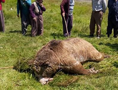 Bolu'da insanlıktan utandıran görüntü! Bu halde bulundu!