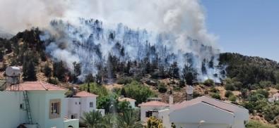 KKTC'de orman yangını!
