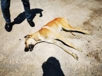KAÇAK - Ankara'da Bos Arazide Telef Olmus 6 Köpek Bulundu