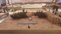 KANALİZASYON - Gaziantep Büyüksehir Belediyesinden 9 Bin Tavuk Dagitimi